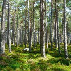 Traducción en el ámbito de la ecología y el medio ambiente (FR-ES)