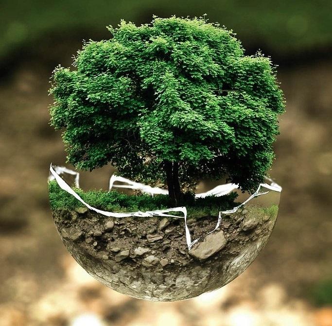 Traducción en el ámbito de la ecología y el medio ambiente