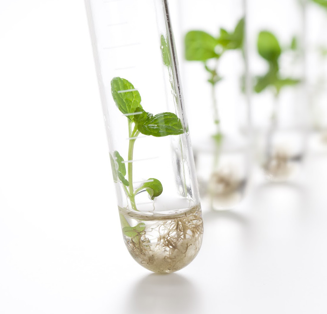 Traducción de patentes de biotecnología (EN-ES)